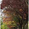 京都-一乘寺-白川通-2.jpg
