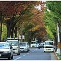 京都-一乘寺-白川通-3.jpg