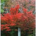 京都-一乘寺-曼殊院-1.jpg