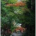 京都-一乘寺-曼殊院-4.jpg