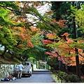 京都-一乘寺-曼殊院-6.jpg