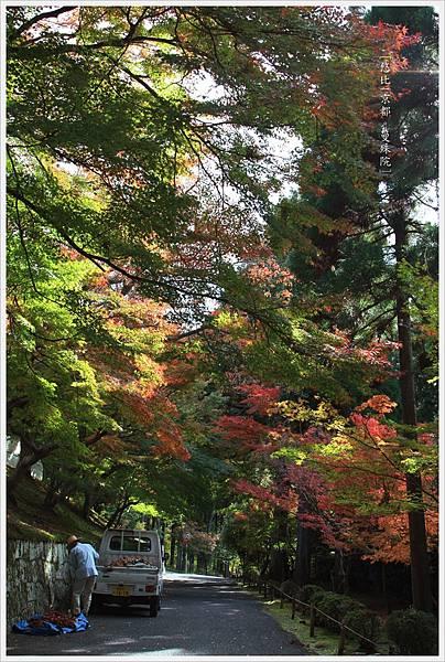 京都-一乘寺-曼殊院-7.jpg