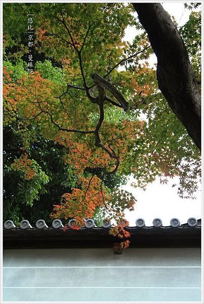 京都-一乘寺-曼殊院-9.jpg