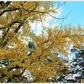 京都-一乘寺-曼殊院-13.jpg