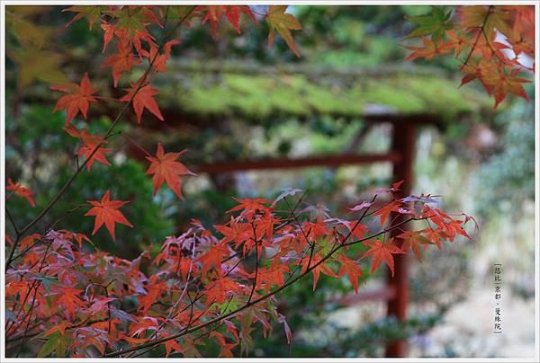 京都-一乘寺-曼殊院天滿宮-2.jpg