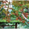 京都-一乘寺-曼殊院天滿宮-3.jpg