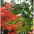京都-一乘寺-曼殊院天滿宮-4.jpg