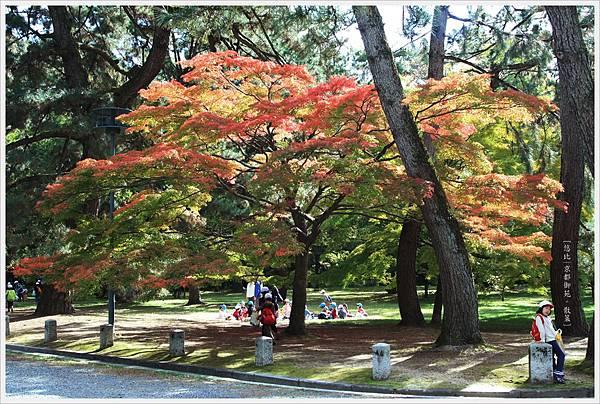 京都-京都御苑-3.jpg