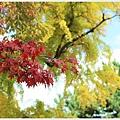 京都-京都御苑-6楓紅.jpg