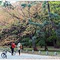 京都-京都御苑-10旅人.jpg