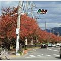 京都-鴨川三角洲-6路邊.jpg