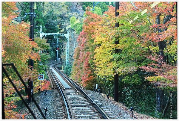 賞楓列車-車尾-2.jpg