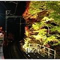 賞楓列車-貴船口-3.jpg