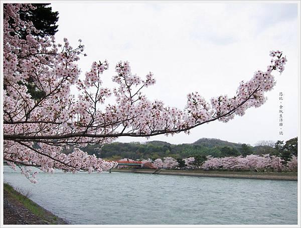 宇治-宇治-川邊櫻花-4.JPG