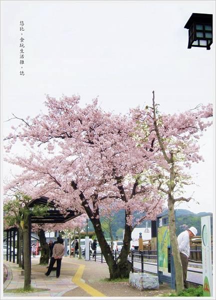 宇治-站前櫻花.JPG
