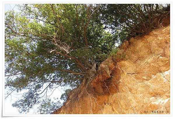 小豆島-天使的散步道-潮間帶小島上樹木-1.JPG