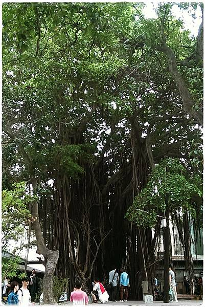 台中文學館-老榕樹