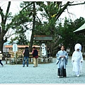 阿蘇神社-高砂之松.JPG