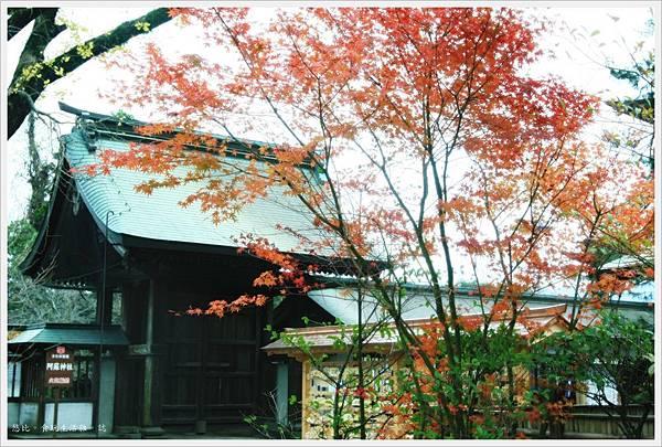 阿蘇神社-御幸門前紅葉.JPG
