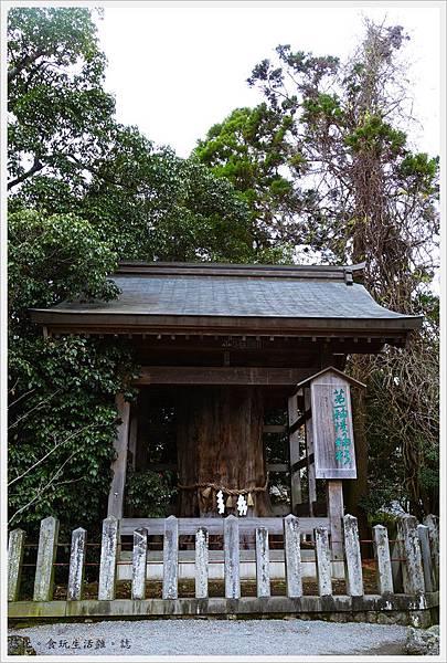阿蘇神社-第一神杉.JPG