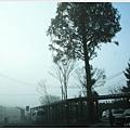 由布院-清晨車站前-2.JPG