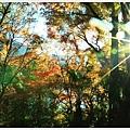 由布院-金麟湖-2.JPG