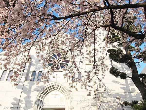 蘆屋-天主教蘆屋教會前櫻花樹.JPG