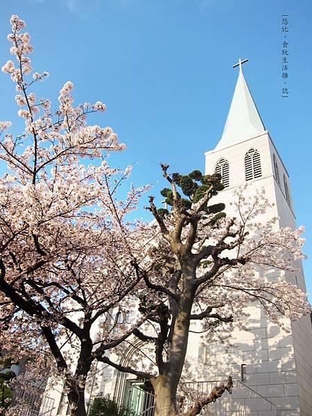 蘆屋-天主教蘆屋教會旁櫻花樹.JPG