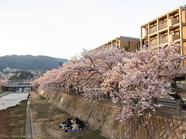 蘆屋-蘆屋川旁櫻花-4.JPG