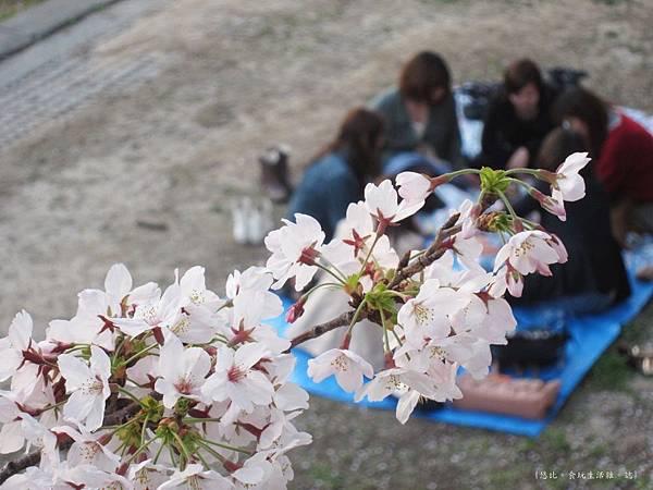 蘆屋-蘆屋川旁櫻花-6.JPG