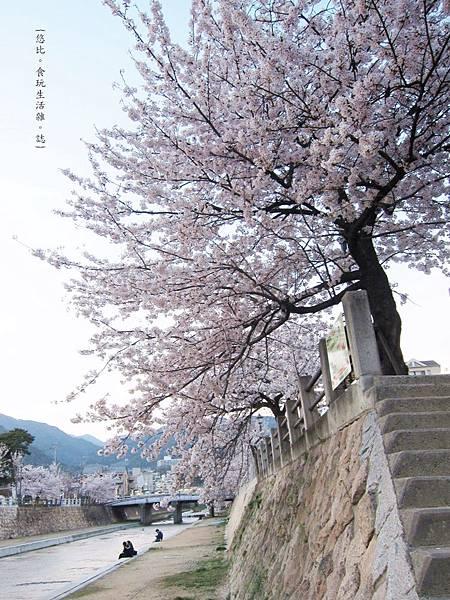 蘆屋-蘆屋川旁櫻花-10.JPG
