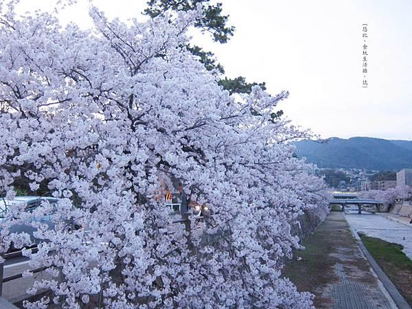 蘆屋-蘆屋川旁櫻花-14.JPG