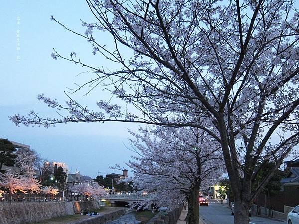 蘆屋-蘆屋川旁櫻花-16.JPG