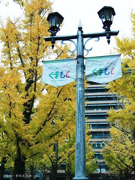 熊本-縣廳銀杏並木-10.JPG