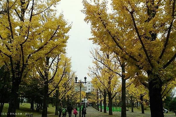 熊本-縣廳銀杏並木-12.JPG