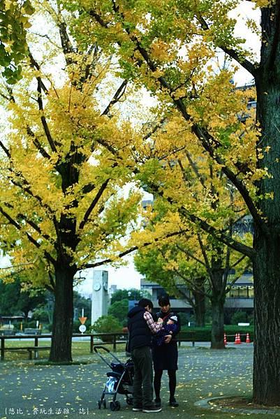熊本-縣廳銀杏並木-13.JPG