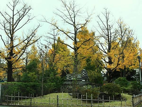 熊本-縣廳銀杏並木-入口.JPG