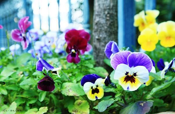 長崎-哥拉巴花園-花.JPG