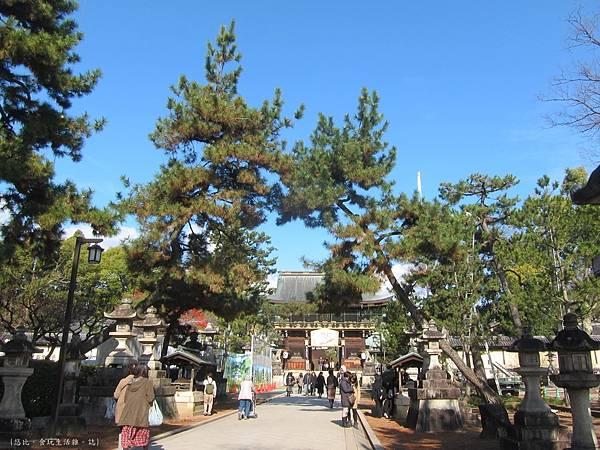 北野天滿宮-松樹-1.JPG