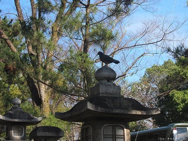 北野天滿宮-常夜燈上的烏鴉.JPG