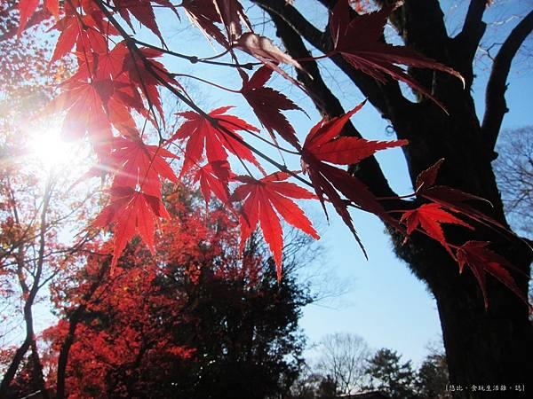 北野天滿宮-楓紅-2.JPG