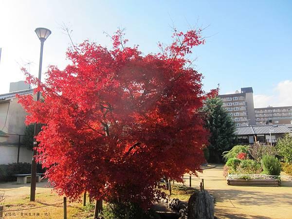鳥岩樓-公園紅葉-1.JPG