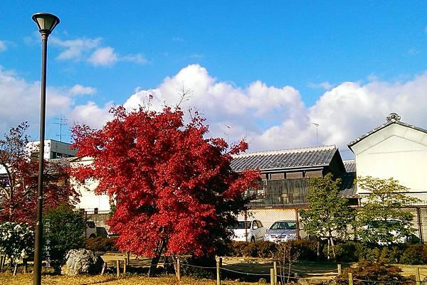 鳥岩樓-櫻井公園