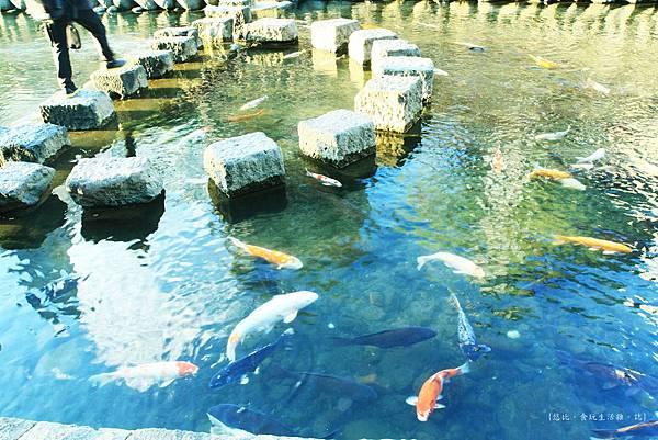 眼鏡橋-川鯉魚.JPG