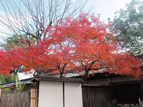 西本願寺-一抹紅葉.JPG