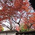 西本願寺-一抹紅葉-1.JPG