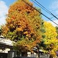 西本願寺-東本願寺街道-1.JPG