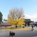 西本願寺-阿彌陀堂長廊看出去的視角-1.JPG