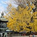 西本願寺-阿彌陀堂門前石燈籠-1.JPG