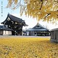 西本願寺-阿彌陀堂門與銀杏-1.JPG